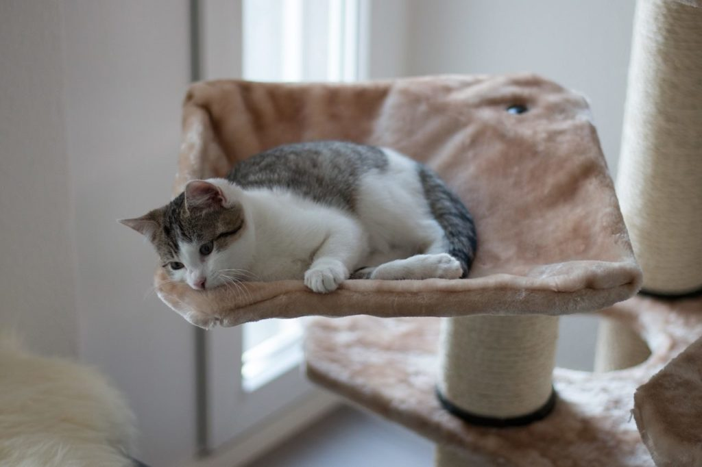 Order your cat tree for your pet
